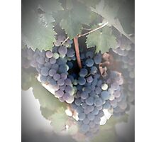 A Beautiful Bunch of Grapes Photographic Print