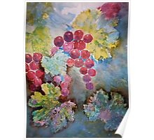 Wine Grapes in the Vineyard Poster