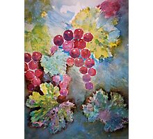 Wine Grapes in the Vineyard Photographic Print