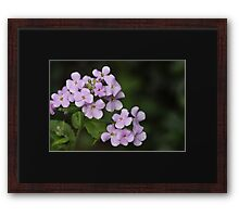Light Mauve Floral Design Framed Print