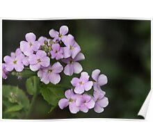 Light Mauve Floral Design Poster