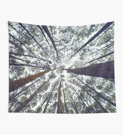 Light Through the Trees Wall Tapestry