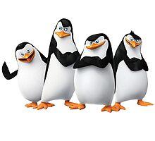 Penguin Madagascar 1 Photographic Print