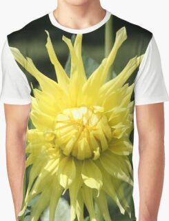 Yellow Dahlia close up Graphic T-Shirt