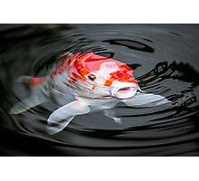 KOI Photographic Print