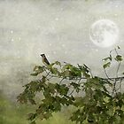 Moonlight on Cedar Waxwing by KathleenRinker