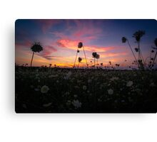 Sunset Wildflowers Scenic Country Field Canvas Print