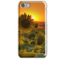 Sunflower Sun Rays iPhone Case/Skin