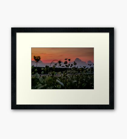 Wildflowers At Dusk Framed Print