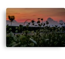Wildflowers At Dusk Canvas Print