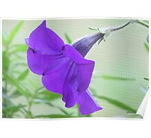 A Purple Petunia on the Porch Poster