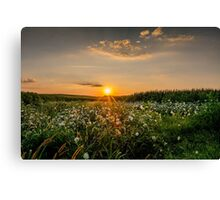 Sun Setting Over Field of Wildflowers Canvas Print