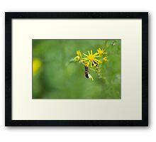 Dangling Caterpillar Framed Print