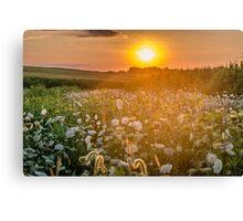 Ohio Wildflowers Canvas Print