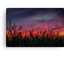 Ohio Cornfield After Sunset Canvas Print
