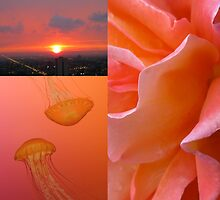 PEACHY-PINK COLOR COLLAGE by gottschalkphoto