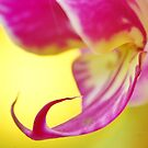 Vibrant Pink Orchid by Lindie