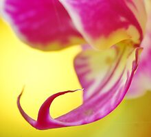 Vibrant Pink Orchid by Lindie Allen