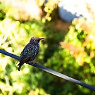 Bird On A Wire by Michael McGimpsey