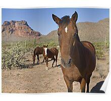 Wild Desert Horses Poster