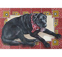 Ted on Red, Black Lab Photographic Print