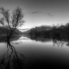 The Lone Tree by Darren Wilkes