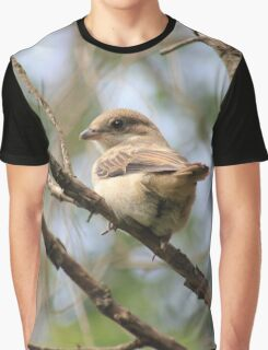 Fiscal Shrike fledgling Graphic T-Shirt