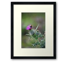 Thistle & the Bee two stingers  Framed Print