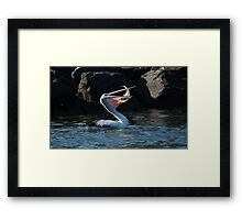 Now that's a catch (part 1) Framed Print