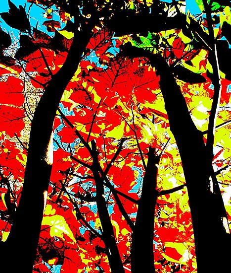 Flame Trees by Kitsmumma