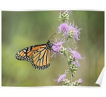 Fall Monarch 2016-1 Poster