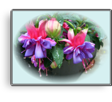 Raindrops on Fuchsia Bells and Buds - Framed Vignette Canvas Print