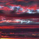 IMG-2921 by Carolyn  Fletcher