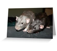 Dumbo rats Greeting Card