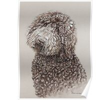 Poodle dog portrait in sepia Poster