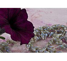 Velvet And Shells Photographic Print