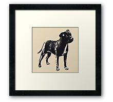 Staffordshire Bull Terrier - Conte Style Framed Print
