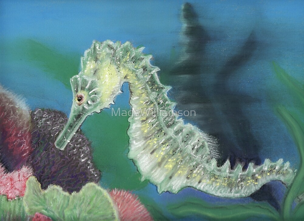 The Seahorse by MagsWilliamson