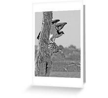 Colorado River Osprey Greeting Card