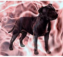 Staffordshire Bull Terrier - Pink Smoke Photographic Print