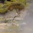 Waimangu Volcanic Valley by Werner Padarin