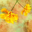 Watercolor Flowers by Barbny