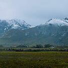 The Sentinels in Snow - 02 August 2014, Tasmania by Odille Esmonde-Morgan