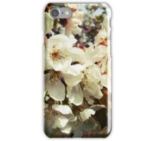 Original photo of wonderful white cherry blossoms  iPhone Case/Skin