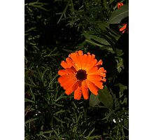 flower of the morning Photographic Print