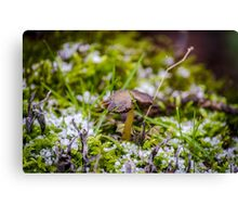 Dragon taking cover under mushroom Canvas Print