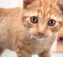 Ginger Kitten : Curiosity Sticker