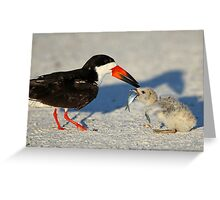 Black Skimmer 3:Successful transfer-Chick now has fish! Greeting Card