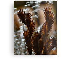 Afternoon Ferns Metal Print