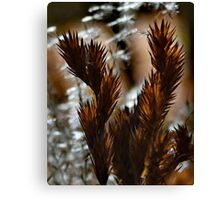 Afternoon Ferns Canvas Print